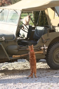 Harriett off to war with Freedie the red thinking he may join in!